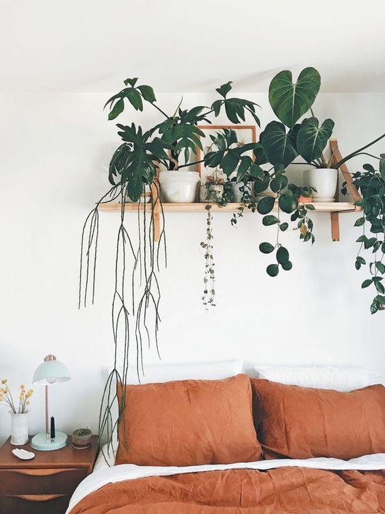 Plants on The Floating Shelf